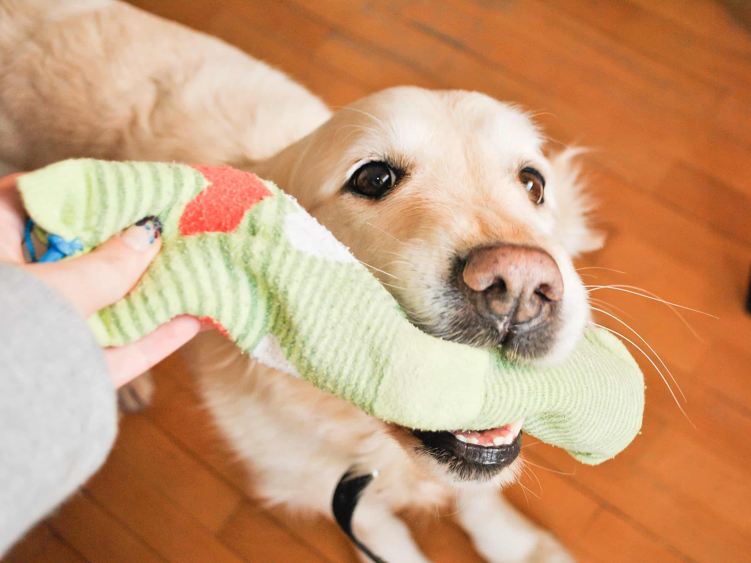 Make a toy for Your Dog out of Socks Step 6